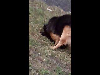 8.dog Fucking Cat